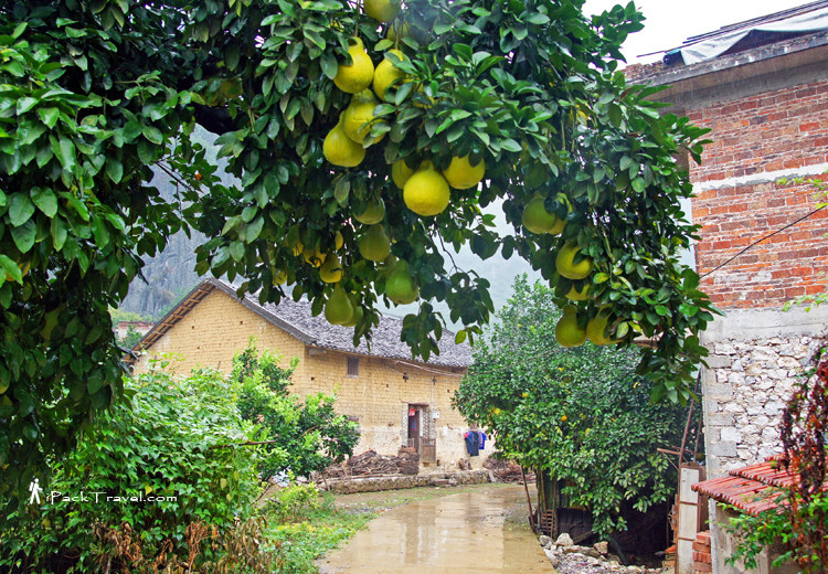 Small village with pomelo tree