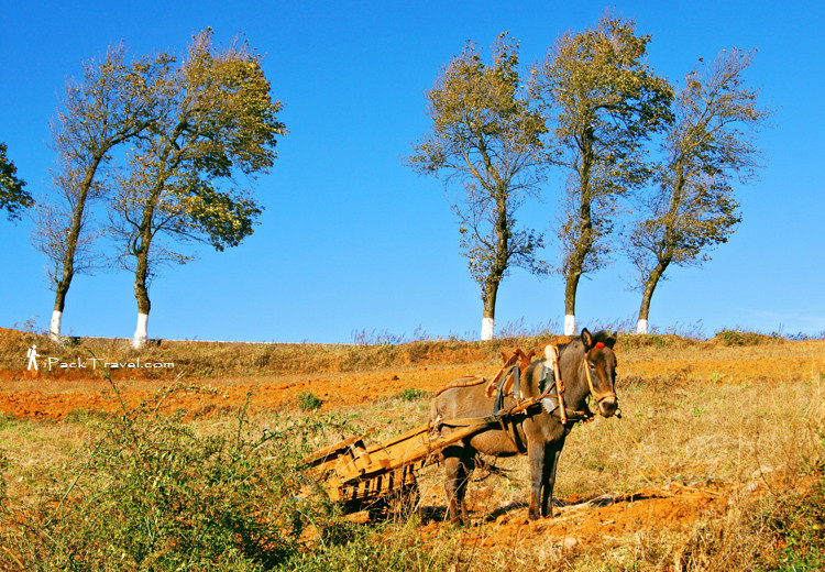 Trees by the road and a horse cart