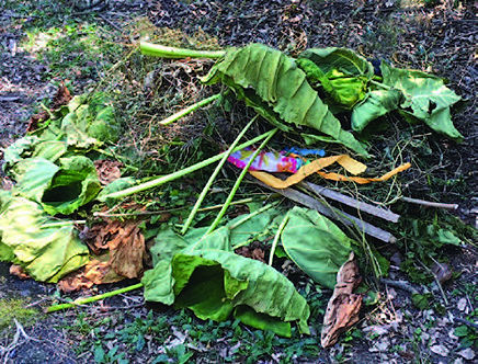 Neve place wild taro plants out for curbside trash pickup.