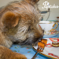 Enjoy High Tea with your Pup!