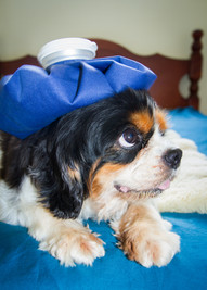 Keep your dog safe from these foods
