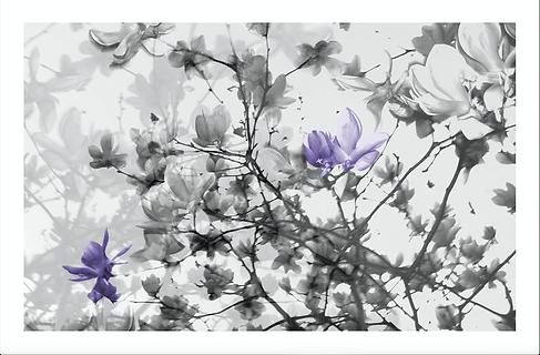 Blooms by Layla Love Emillions Art 20190