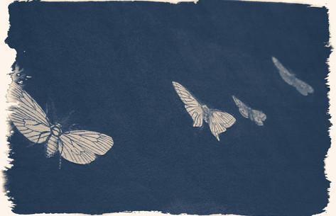 moth butterfly rises rise change monarch transform