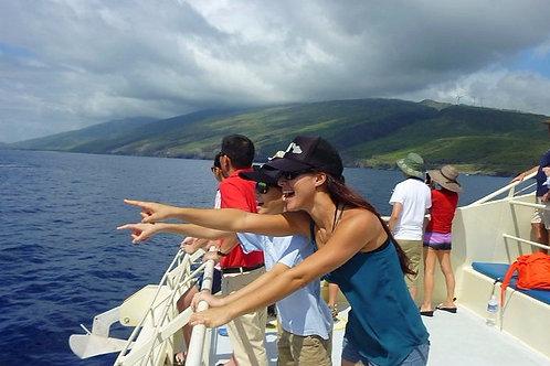 2 Hour Whale Watch - Catamaran Boat - Guaranteed Sightings - Agents