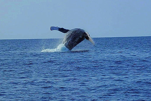 Whale Watch - Small Group Tour - Agents