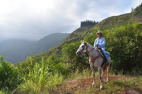 Afternoon Horseback Riding - Maui Mountain Activities