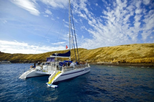 Discover Molokini & Turtle Town - Agents