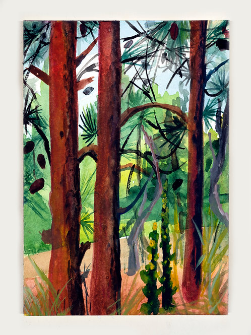 Pines of Gordon's Pond