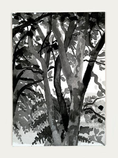 Riverside - Black & White