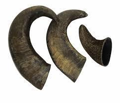 ''NEW'' 1s x T. Forrest Medium Buffalo Horn