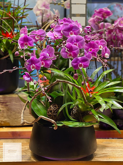 Orchid (6-branch)