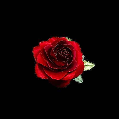 Giardino di Rose - Valentine