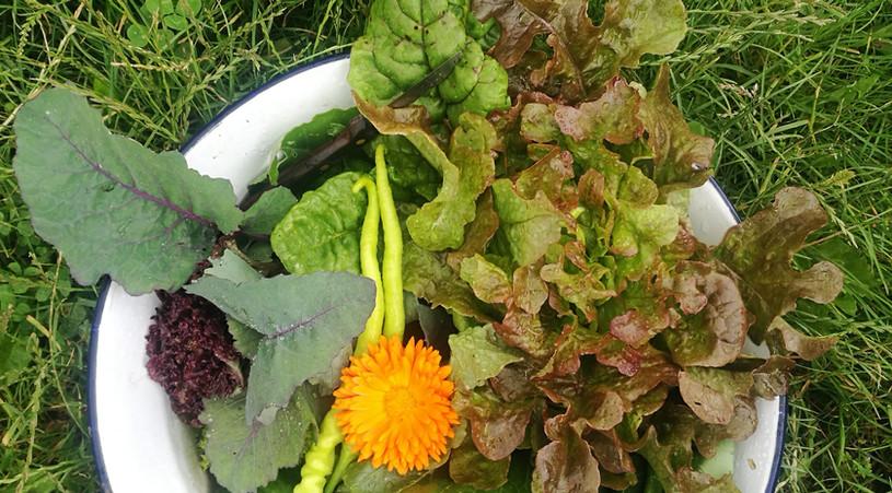 Jedna z první jarní úrody, to je radosti!