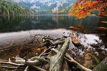 Černé jezero - Black Lake Sumava