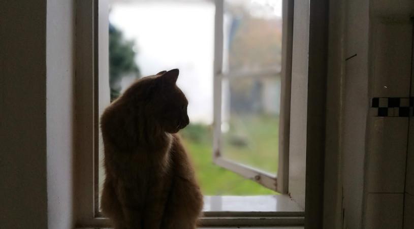Šíša v okně
