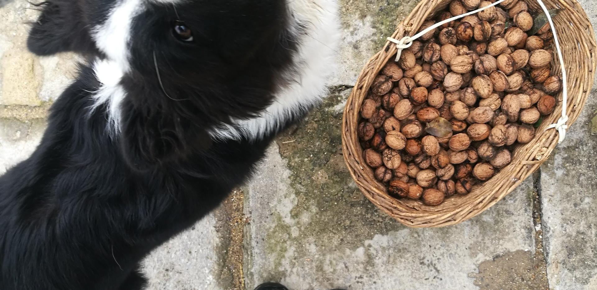 Boksi ořechy taky miluje!