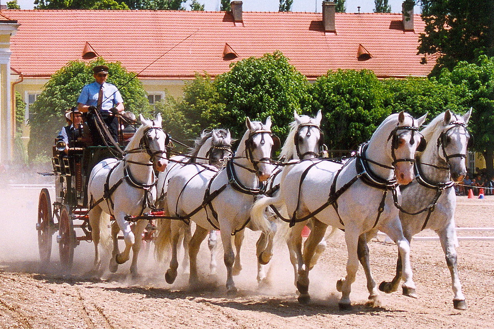 UNESCO Landscape for Breeding and Training of Ceremonial Carriage Horses at Kladruby and Labem