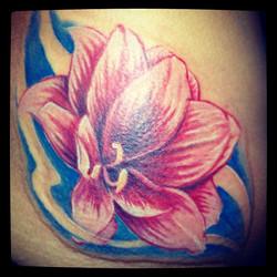 Not a Lotus