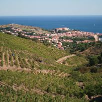 Vignobles, Collioure