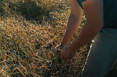 Crop Checking (3).jpg