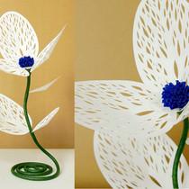 珊瑚花(三花)白