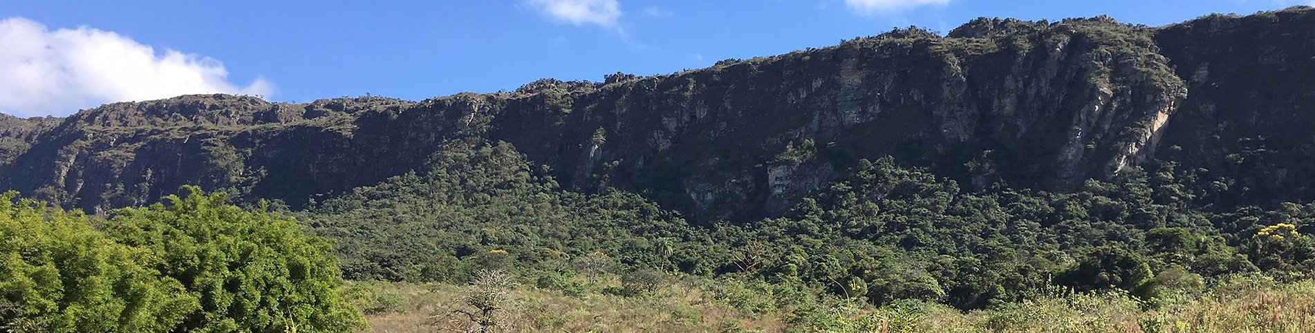 minas gerais - region der grünen propolis
