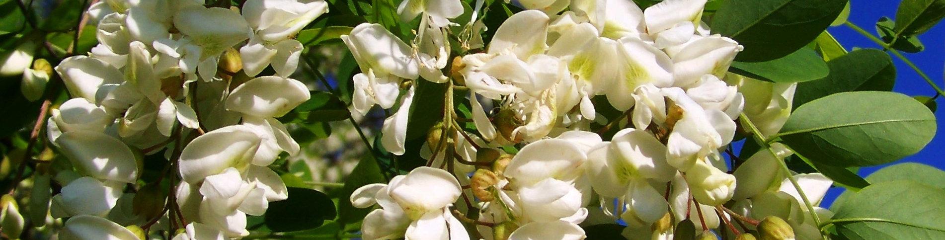 branch-blossom-plant-flower-spring-produ