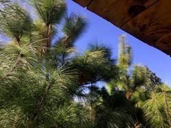 Saluda a los árboles