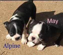 FEB 2017 pups