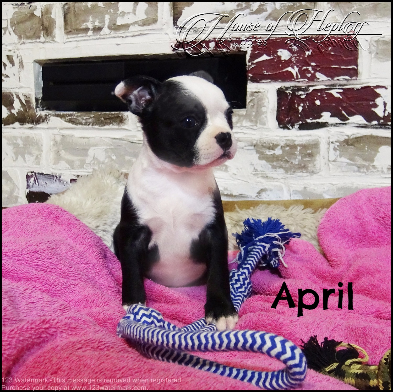 Pretty April