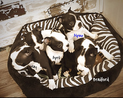 New puppies
