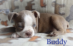 buddy recent