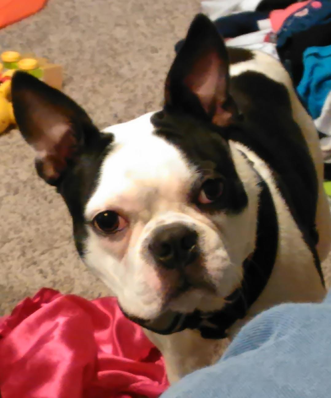 Cara's Puppy
