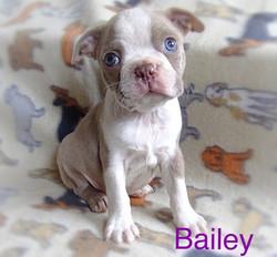 Bailey latest 2