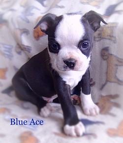 Blue ace 2