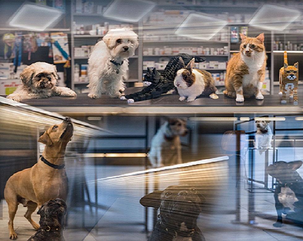 Un accueil toujours chaleureux à la clinique veterinaire Ouest My Vet Paris 17!