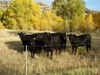 Legal Boundary Fence Amendment