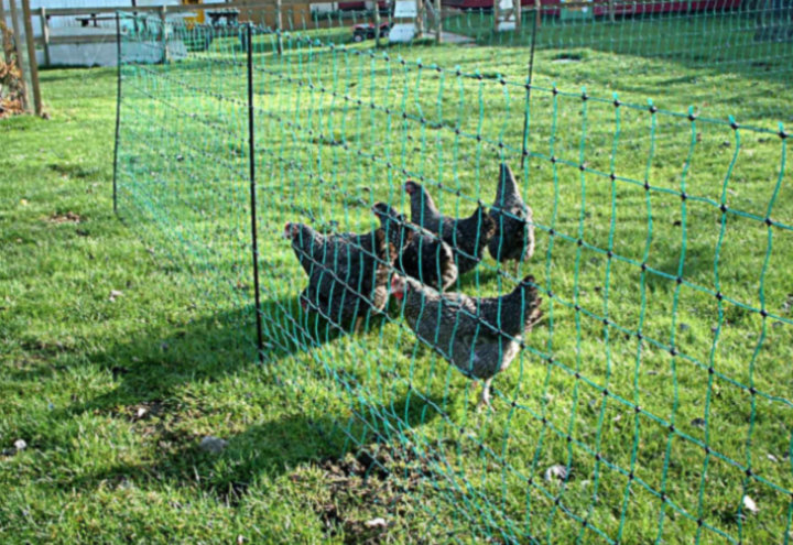 Chicken - Poultry Fence
