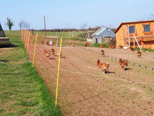 Fencing for your Poultry Investment