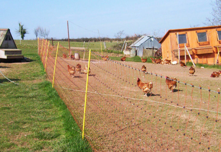 Us electric fence to protect your chickens