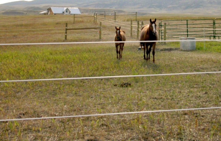 3 wire permanent equine fence (6)