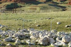 6-wire sheep perm