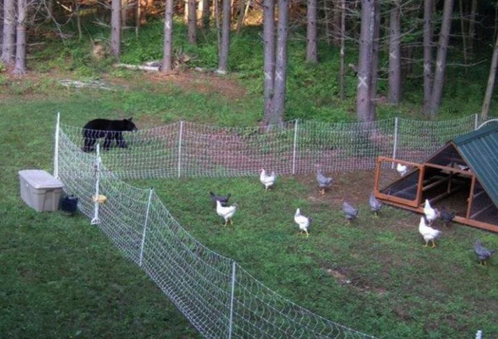 Poultry Net 2