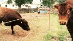 5-wirePerm Bull-Control