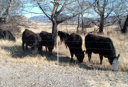 3-wire-cattle-post