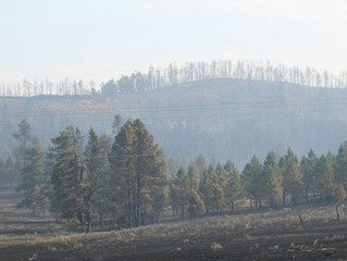 Montana and Western States Wildfires
