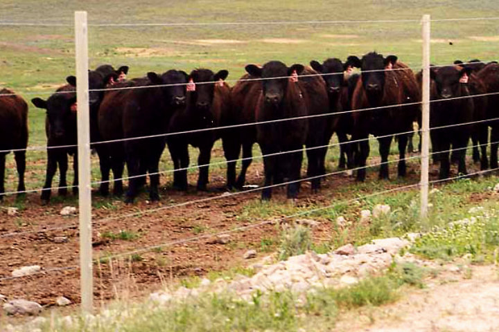 6 Wire Perm Feedlot Fence