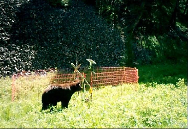 Bear Fence