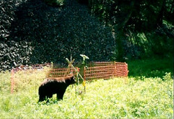 Bear Exclusion