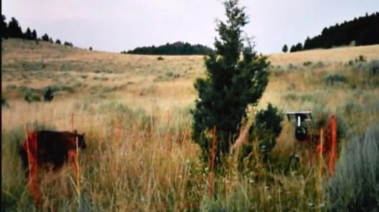 Bear Video Dry Lake